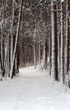 Snow-clad lane in winter wood Stock Photo