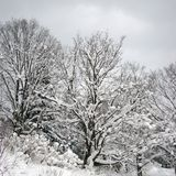Snow-clad tree Royalty Free Stock Images