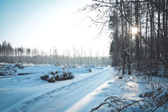 Snow clearing in the woods Stock Photo
