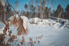 Snow clearing in the woods Stock Photos