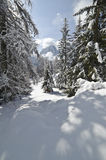 Snow Climbing through a forrest in the Dolomites Royalty Free Stock Photos