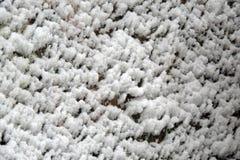 Snow, close-up Stock Photography
