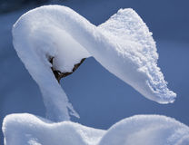 Snow Cobra Stock Photo