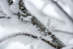 Snow Collected on a Branch Stock Photo
