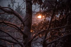 Early morning snow falling on trees in Colorado. stock images