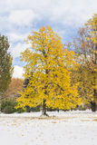 Snow and colorful autumn trees Stock Images
