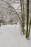 Snow corral and trees. Alder and cottonwood trees snow horse corral Royalty Free Stock Image