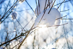 Snow cover on a bush Stock Photo