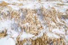 Snow cover grass Stock Photo