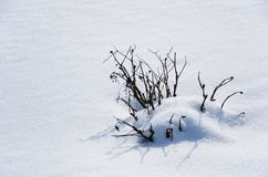 Snow cover and a snowbound bush. Stock Photo