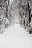 Snow Cover Trail Royalty Free Stock Image