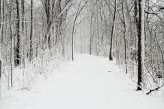 Snow Cover Trail Royalty Free Stock Images
