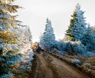 Snow Cover Trees Royalty Free Stock Images