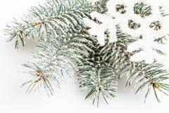 Snow-covered ветвь сосенки Стоковая Фотография RF