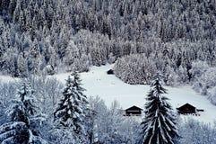 Snow-covered зима с спрусом Стоковая Фотография RF