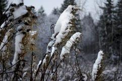 Snow-covered поле Стоковое фото RF