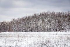 Snow-covered поле Стоковые Изображения
