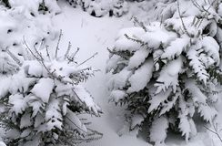 Snow Covered royalty free stock photos