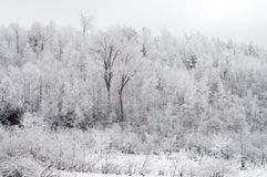 Snow-covered Stock Image