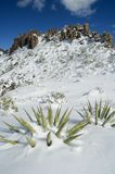 Snow covered Agaves. A winter storm blankets desert cactus and agave atop Superstition Mountain, east of Phoenix Arizona Stock Photos