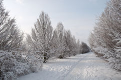 Snow-covered alley Stock Photography