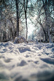 Snow covered alley after heavy snow in the sun. With trees, branches and bushes covered in heavy snow Stock Image