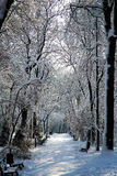 Snow covered alley in the park with benches. Snow covered alley and snow covered benches in the park with afternoon sun with trees and branches covered in snow Royalty Free Stock Photography