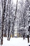Snow-covered alley to the old manor house royalty free stock photo