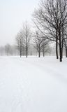 Snow covered alley in a winter park Royalty Free Stock Image