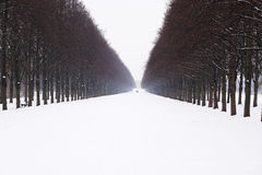 Snow covered alley in winter Stock Image