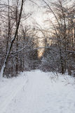 Snow-covered alley in the woods with sunset sky Royalty Free Stock Photos