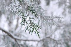 Snow-covered altijdgroene tak Royalty-vrije Stock Afbeeldingen