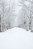 Snow covered avenue Stock Photography
