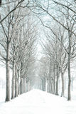 Snow-covered avenue of trees. A view along an avenue of deciduous trees in winter, with the trees and path dusted in fresh snow royalty free stock photos