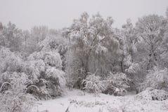 Snow-covered Bäume Stockfotografie