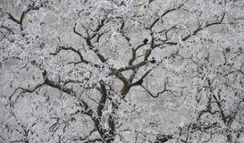 Snow-covered Bäume Stockbild