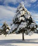 Snow-covered Bäume Lizenzfreies Stockbild