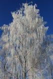 Snow-covered Bäume lizenzfreie stockfotografie