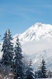 Snow-covered Bäume auf Gebirgshintergrund Stockfotografie