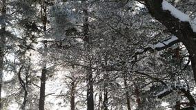 Snow-covered baai met hout stock videobeelden