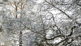 Snow-covered baai met hout stock video