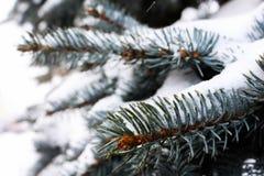 Snow-covered Baum Stockbild