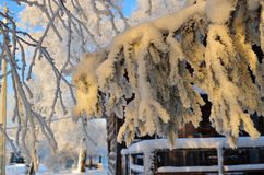 Snow-covered Baumzweig Stockbild