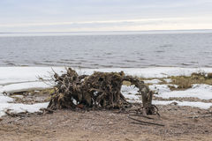 Snow-covered beach on the Gulf of Finland near St. Petersburg Stock Images