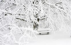 Snow Covered Bench Near Snow Covered Bare Tree Stock Photo