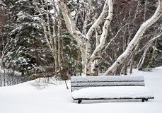 Snow covered bench in Winter Stock Images