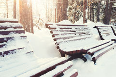 Snow-covered benches in the park. Royalty Free Stock Photos