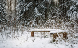 snow-covered benches in the woods on background of white firs and pines Stock Photography