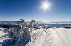 Snow covered bent little pine tree in winter mountains. Arctic l royalty free stock image
