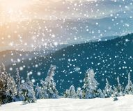 Snow covered bent little pine trees in winter mountains. Arctic landscape. Colorful outdoor scene, Happy New Year celebration. Concept. Artistic style post royalty free stock photos